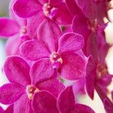 Closeup beautiful purple orchids flower tree Royalty Free Stock Image