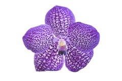 Closeup beautiful purple orchids flower tree Stock Photography