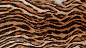Beautiful real skin of leopard. Closeup of beautiful real skin of leopard background texture pattern Stock Image