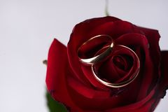 Closeup of a beautiful romantic red Rose with two wedding gold ring Royalty Free Stock Images