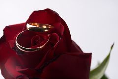 Closeup of a beautiful romantic red Rose with two wedding gold ring Royalty Free Stock Photos