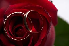 Closeup of a beautiful romantic red Rose with two wedding gold rings Royalty Free Stock Photo
