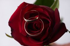 Closeup of a beautiful romantic red Rose with two wedding gold rings Royalty Free Stock Photography