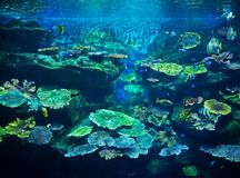 Beautiful Scene of Undersea Coral Reef with Sea Fish. Closeup Beautiful Scene of Undersea Coral Reef with Sea Fish Stock Image