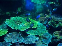 Beautiful Scene of Undersea Coral Reef with Sea Fish. Closeup Beautiful Scene of Undersea Coral Reef with Sea Fish Royalty Free Stock Photos