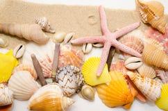 Closeup beautiful starfish and seashells lying on the sand stock image