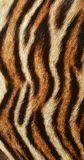 Beautiful Tiger fur background texture Stock Photography