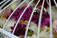 Closeup with beautiful wedding rings on flowers. Selective focus Royalty Free Stock Image
