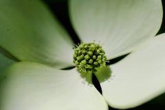 closeup on beautiful white-greenish flower royalty free stock photography