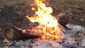 Closeup of beautiful white smoke from a campfire stock footage