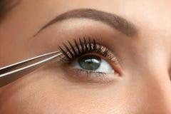 Closeup Of Beautiful Woman Eye With Long Black False Eyelashes Royalty Free Stock Images