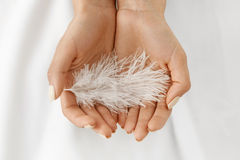 Closeup Of Beautiful Woman Hands Holding White Feather Stock Photos