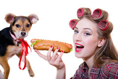 Closeup on beautiful young pinup woman in curlers eating a hot dog on a white background, dog looking at the camera Stock Photo