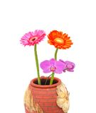 Closeup on beauty bloom vase. Blooms and ceramic vase decor indoor Royalty Free Stock Photo