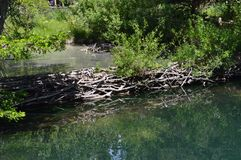 Closeup of beaver dam in pond stock photo