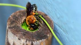 Closeup of bee make nest on bamboo. A closeup of bee make nest on bamboo stock photo