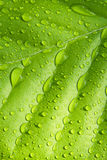 Beech leaf with raindrops Stock Images