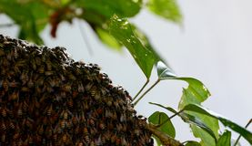 A bee hive - closeup royalty free stock photos