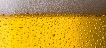 Beer background. A closeup from a beer glass with dew drops and froth. ideal for websites and magazines layouts Stock Images