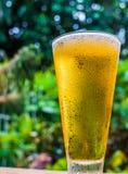 Closeup beer glass on garden background Stock Photos