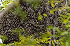 Closeup of bees on a beehive Royalty Free Stock Image