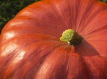 Closeup of a big pumpkin. A part of a big orange pumpkin Stock Photo