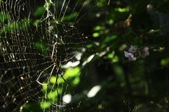 Closeup, big spider catch on cobweb in green tropical forest with ping flower. Spider composition on left side. Horizontal color i Stock Images