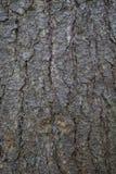 Closeup of birch bark Royalty Free Stock Photos
