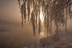 Closeup birch branches heavily covered with fresh  hoarfrost. Sunrise, fog over the river. In the morning frost, humidity. Miracle nature royalty free stock photography