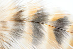 Closeup of Bird feather Stock Photography