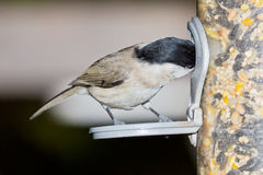 Bird at feeding ground Stock Image