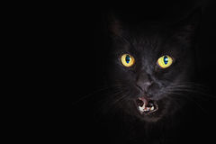 Free Closeup Black Cat Mouth Open Stock Photography - 78228382