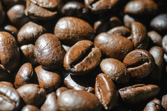 Closeup of black coffee beans. With focus on one Royalty Free Stock Photography