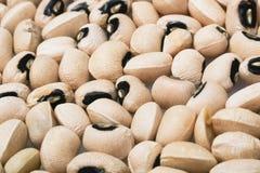 Closeup Black-Eyed Peas Stock Photo