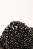 Closeup of Black Truffle with White Copy Space Stock Photography
