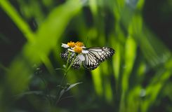 Closeup black and white butterfly on grass flower royalty free stock photo