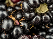 Closeup of blackberries Royalty Free Stock Photos