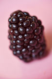 Closeup of a blackberry Royalty Free Stock Image