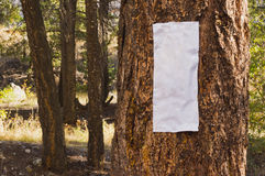 Closeup of blank sign on tree Royalty Free Stock Image