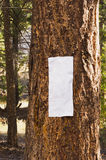 Closeup of blank sign on tree trunk Stock Photography