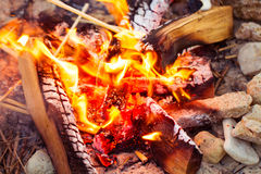 Closeup of blazing campfire coals Royalty Free Stock Photos