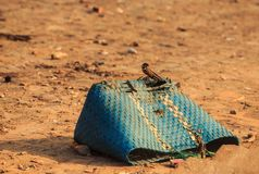 Closeup Blue Dirty Torn Plastic Wicker Bag on Ground Stock Photography