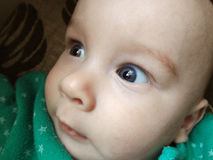 Closeup blue eyes. Of cute little baby boy Royalty Free Stock Photos