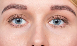 Closeup of blue eyes woman without makeup Royalty Free Stock Images
