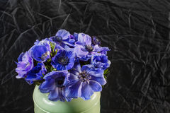 Closeup of a blue and purple gradient poppies anemones in vase. Many flowers - black background. winter flower Royalty Free Stock Photography