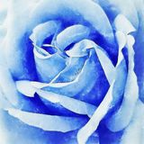 Closeup Blue Rose Fine Art. Digital painting created by hand using several techniques to resemble watercolor on paper Royalty Free Stock Image