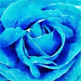 Closeup Blue Rose Fine Art. Closeup white rose fine art, digital painting created by hand using several techniques to resemble watercolor on paper Royalty Free Stock Photography