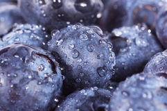 Closeup of blueberries Royalty Free Stock Photos