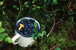 Closeup of blueberries. Closeup of fresh blueberries in an enamel mug Royalty Free Stock Photography