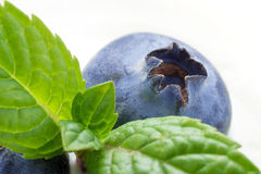 Closeup of Blueberry and Mint. Closeup of superfood blueberry with mint royalty free stock photography